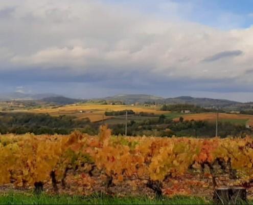 DUPEUBLE Chateau des Pertonnieres vignes